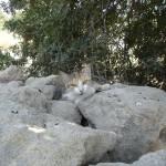 Кошка из Археологического парка