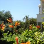 Цветы у отеля